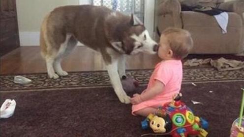 太温馨了!狗狗非要和宝宝亲亲,场面萌倒众人