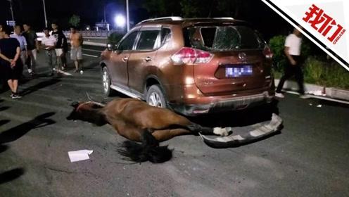 福州街头冲出一匹失控惊马撞人又撞车 车毁马亡致3人受伤