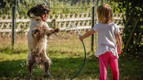 萌娃和狗狗玩耍,网友:太温馨了,不知道该羡慕狗还是孩子?