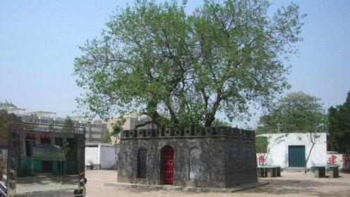 """世界上最小的城,只有十几平方米,城内唯一""""居民""""是一棵树"""