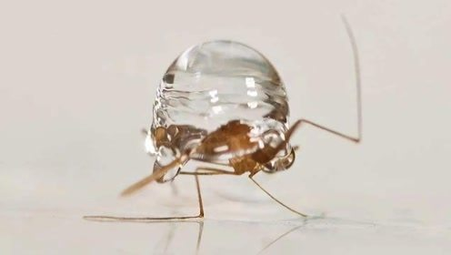 为什么蚊子不会被雨砸死?看到蚊子被雨滴击中的瞬间,终于明白了