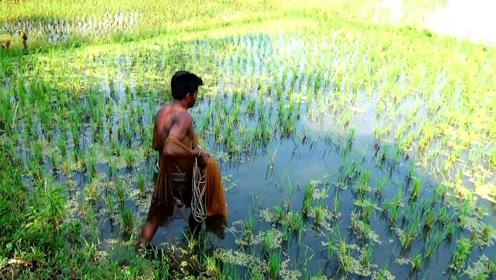 拎着旋网直接冲进了稻田……