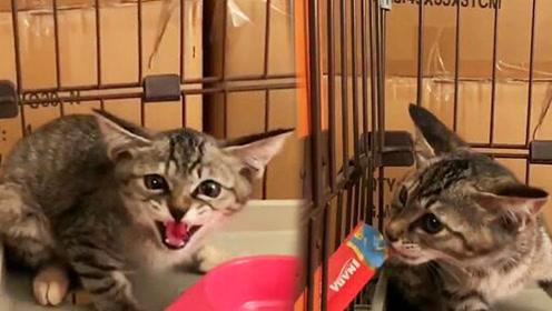 """网友收编了两只小流浪猫,开头两只都超凶,但逃不过""""真香"""""""