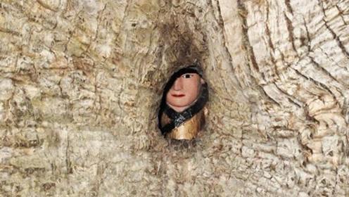 福建千年古樟树,巴掌大的树洞内,竟然藏着一尊塑像!