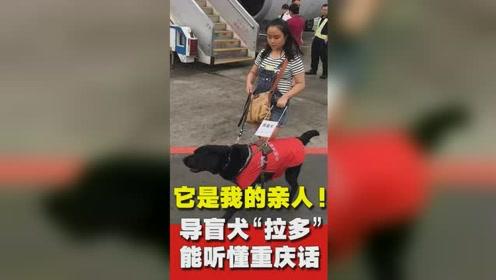 厉害了!重庆一只导盲犬能听懂重庆话 主人走心表白