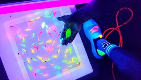 彩虹色的可以发光的鱼你见过吗?堪比霓虹灯,网友:这是新物种?