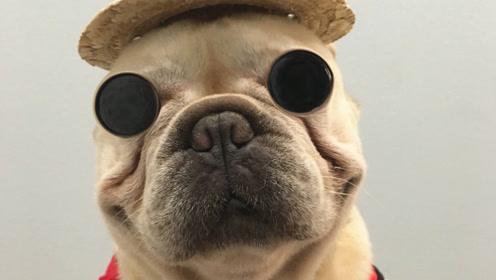 狗狗也会玩指尖陀螺!那些身怀绝技的狗狗!小主人都看呆了!
