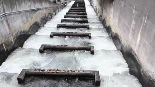 """为鱼专门发明和修建的梯子,取名""""鱼梯"""",它是做什么用的?"""