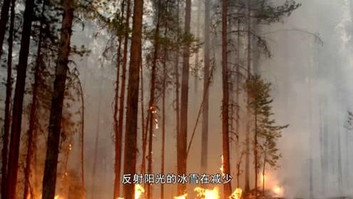 """西伯利亚发生森林大火!为什么北极会""""燃烧""""?"""
