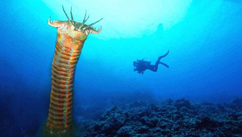 令人闻风丧胆的海底巨怪 今生有幸终于见到了