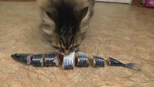 一条鱼切成7块,猫咪会按什么顺序去吃呢?答案让你意想不到