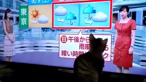 猫:你要是拿这个我可就不困啦