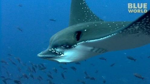 """格陵兰""""睡鲨""""能活500年不死,是什么原因?看完就很明白了"""