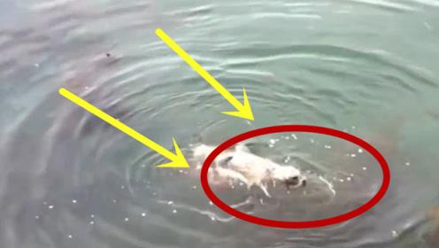 男子发现落水狗狗,正打算救它,仔细一看吓出一身冷汗!
