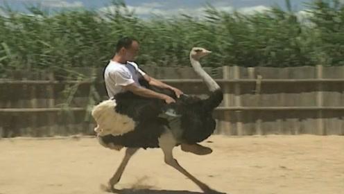 骑鸵鸟是什么感觉?最难征服的座驾,不是一般的拉风啊!