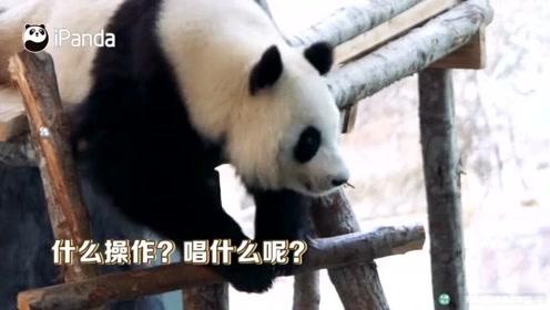 芬兰合唱团为大熊猫唱中文歌