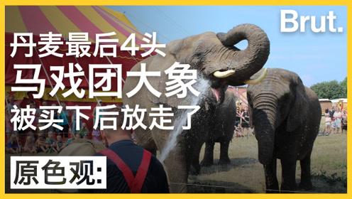 """丹麦人为何要花这么多钱,帮马戏团大象""""赎身""""?"""