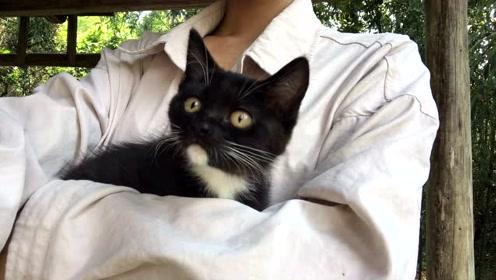 小奶猫第一次出门,它会有什么表现?