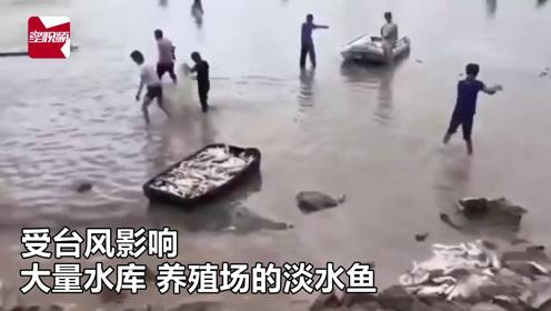 淡水鱼被台风冲进大海,水土不服拼命跳出,村民不分昼夜捡宝