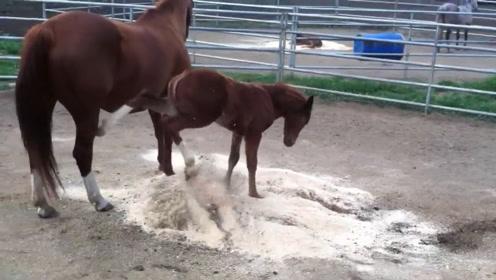 小马故意把灰往妈妈身上踢,母马很生气,下一秒被教育一顿