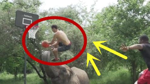 小伙训练大象打篮球,能远射三分能扣篮,还懂得与队友配合!
