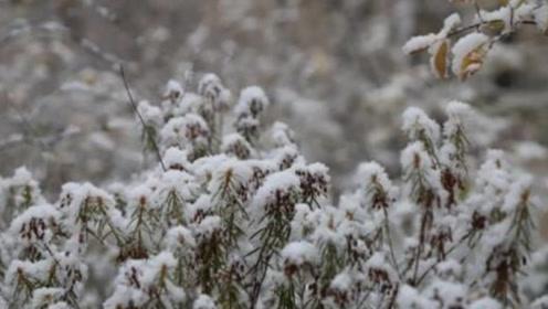 """""""中国最北城市""""迎来今秋首雪, 比去年提前25天"""