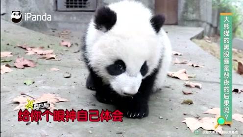 """大熊猫的""""黑眼圈""""是怎样炼成的"""