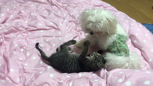 猫:人家不就是给你舔个毛,至于这么大反应吗?
