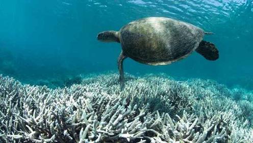 《自然》发文警告:2070年地球所有珊瑚礁或将消失
