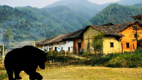 蜂箱莫名被破坏羊只离奇死亡,村民称山上神秘黑影所为,咋回事?
