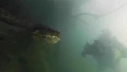 惊险!巴西一潜水员水下与七米长绿水蟒面对面同游