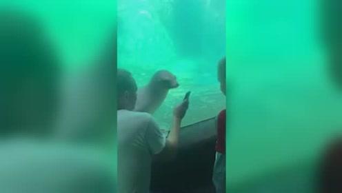 动物园游客玩手机海狮好奇凑近一起看屏幕
