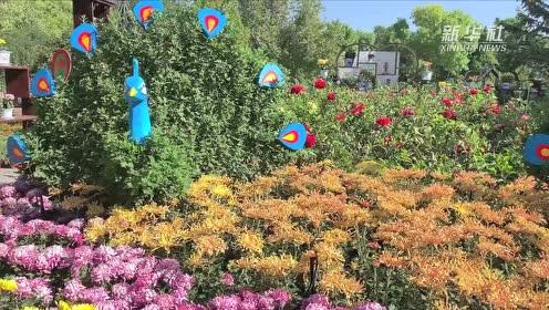 金秋赏菊正当时,一起去看美美的花,菊花和绿雕的组合是今年的亮点之一