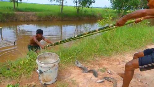 农村牛人自制钓鱼陷阱,两根竹子巧制的陷阱,竟然钓上这么多鱼