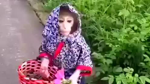猴村姑出現了,活生生的村姑啊  - -