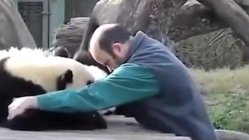 国外饲养员,送别熊猫回归祖国,分别的场面太心酸!