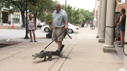"""老人饲养鳄鱼当宠物,每天一起生活,去逛街就""""溜鳄鱼""""!"""
