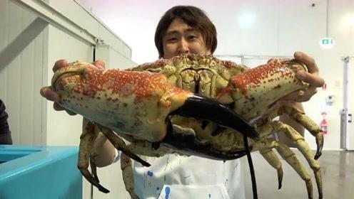 世界上最大的螃蟹,日本小伙花了2万块去吃,没亏还赚了?