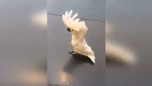 这养的是鹦鹉还是狗?傻傻分不清了,这波模仿稳