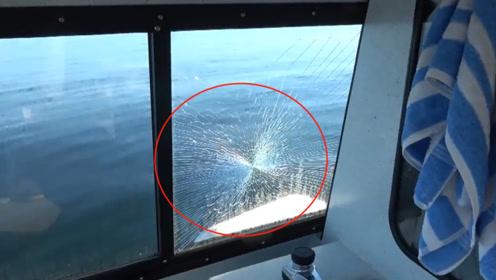 男子出海不幸遇见海洋中的顶级杀手,随便一击就将钢化玻璃击碎!