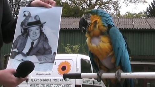 前英国首相养的鹦鹉,活了100多岁,说话习惯跟主人时一模一样