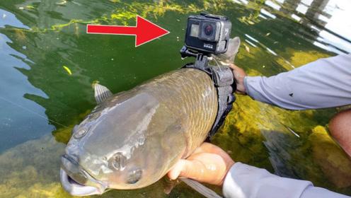 男子把摄像头绑在鱼身上,拍出水底清晰画面,原来鱼的记忆不止7秒!