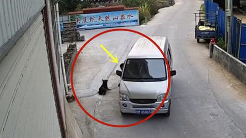 疯狂的偷狗贼,这手法太快了!要不是监控谁会相信这一切