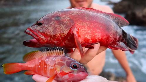 无人小岛边的小石斑鱼,这是不常见的石斑鱼品种!