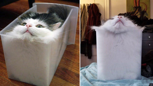 猫到底是固体还是液体?诺贝尔奖得主说出答案,厉害了喵星人!