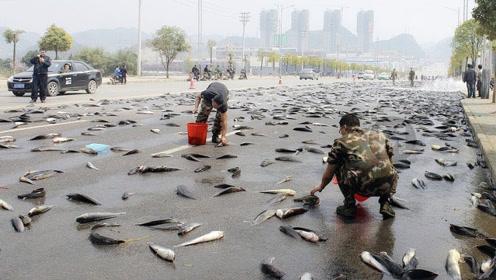 一场暴雨,带来了一群从天而降的鱼,引得村民在街上疯抢!