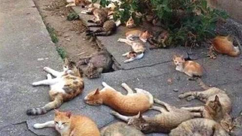 小伙门口种猫薄荷,第二天打开门一看,几十只猫醉倒在现场