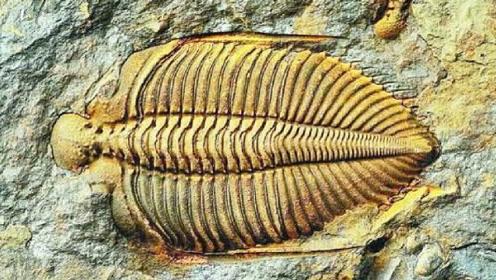 地球发现5亿年前化石,上面的图案让人惊讶,专家:这不可能!
