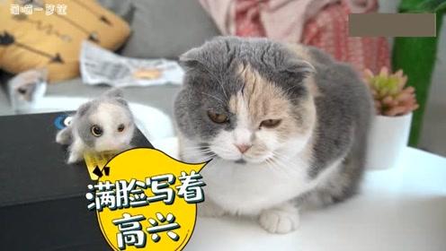 主人用猫毛做了一只猫,猫咪看到后一脸懵逼:这是我生的崽吗?