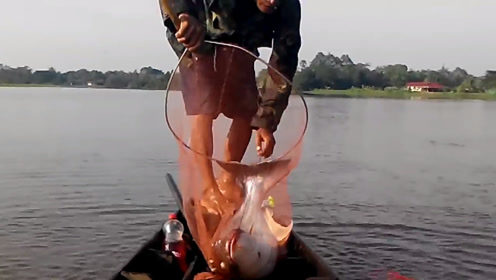 那么古老的捕鱼方法,捕鱼还是很厉害,而且捕的都是大鱼